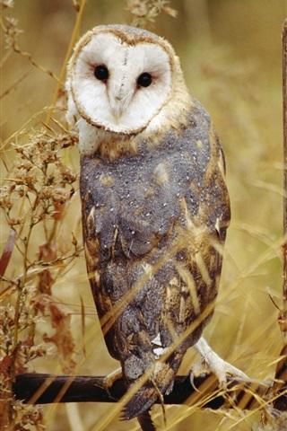 iPhone Wallpaper Owl standing, grass, autumn