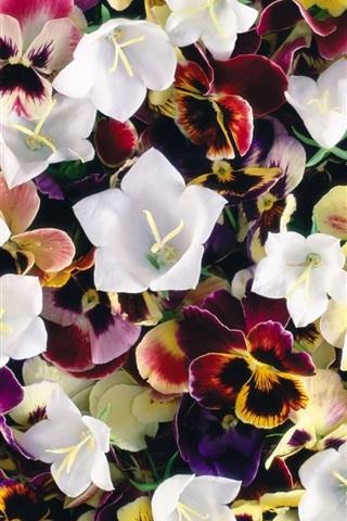 iPhone Wallpaper Pansies and bells flowers