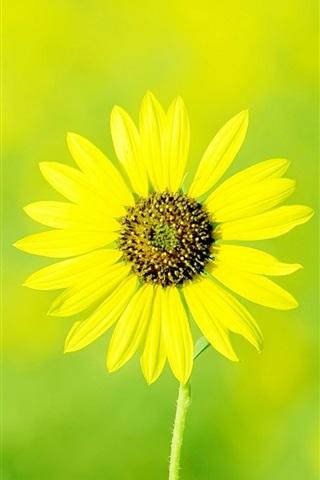 iPhone Hintergrundbilder Einzelne gelbe Blume, Frühling, Bokeh
