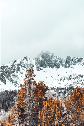 Snow Covered Peaks Trees Winter 1080x1920 Iphone 8 7 6 6s