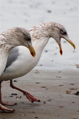 iPhone Wallpaper Two seagulls walk at beach