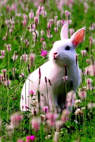 iPhone Wallpaper White bunny in the flowers