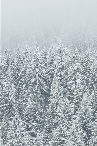 iPhone Wallpaper Winter, trees, spruce forest, snow