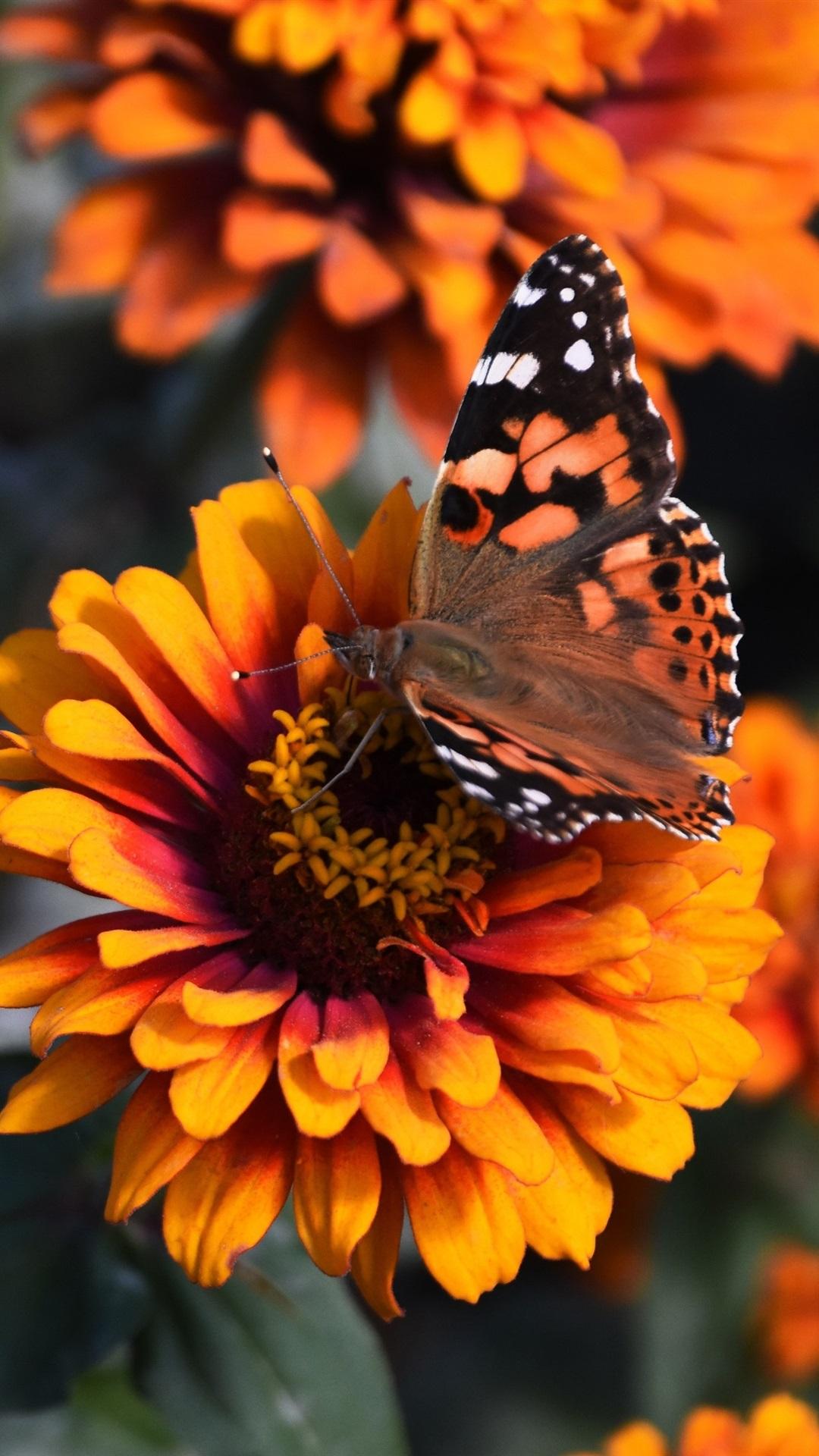 Butterfly Wallpaper Iphone X