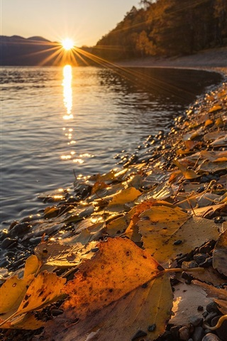 iPhone Wallpaper Altai Nature Reserve, Lake Teletskoye, yellow leaves, autumn, sunset, Russia