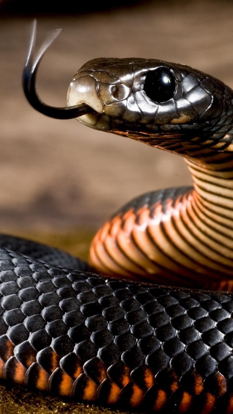 Black Snake Viper 750x1334 Iphone 8 7 6 6s Wallpaper