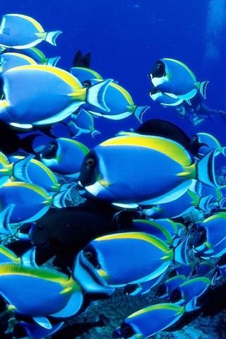 iPhone Wallpaper Blue fish, sea, underwater
