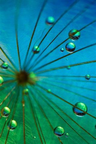 iPhone Papéis de Parede Fotografia macro de dente-de-leão, gotas de água