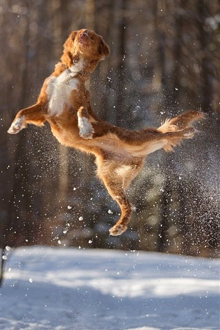 iPhone Wallpaper Dog jumping, snow, winter