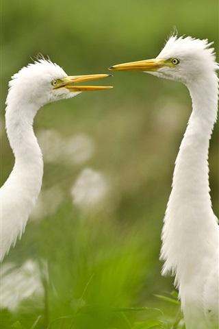 iPhone Wallpaper Egret, couple, grass