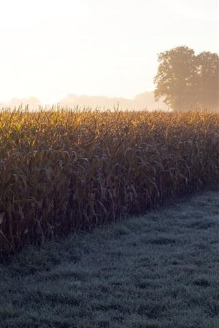 iPhone Wallpaper Field, grass, trees, fog, morning