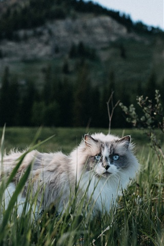 iPhone Wallpaper Furry cat walk in grass