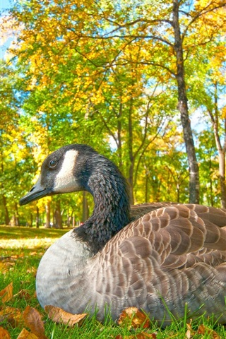 iPhone Wallpaper Goose rest in the forest