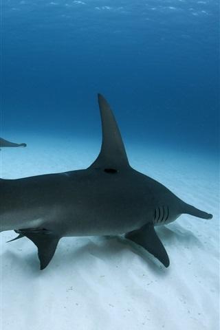 Great Hammerhead Shark Sea Underwater 640x1136 Iphone 5 5s 5c Se