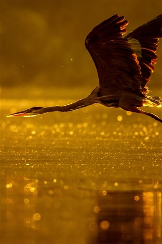 iPhone Wallpaper Heron flight, lake, dusk