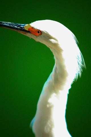 iPhone Wallpaper Heron, neck, beak, head, eyes, green background