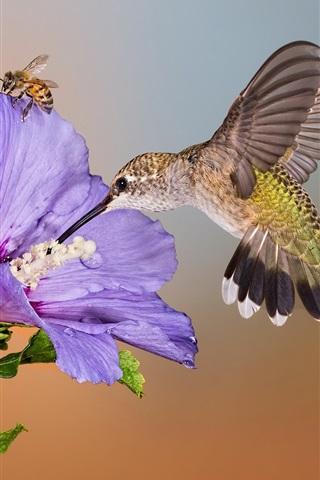 iPhone Wallpaper Hummingbird flight, purple flower, bee