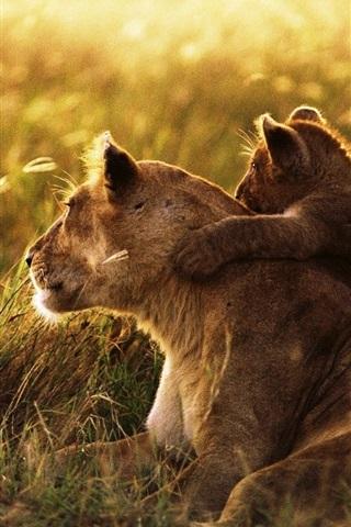 iPhone Wallpaper Lion family, affection, cub, grass, sunshine