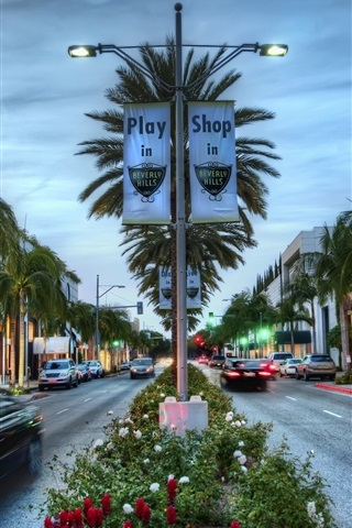 Los Angeles Hollywood Shop Palm Trees Hdr Style Usa