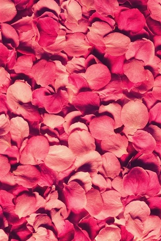 iPhone Wallpaper Many pink rose petals background