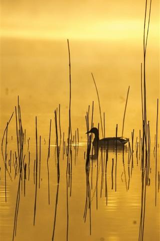 iPhone Wallpaper Morning, lake, grass, duck, fog