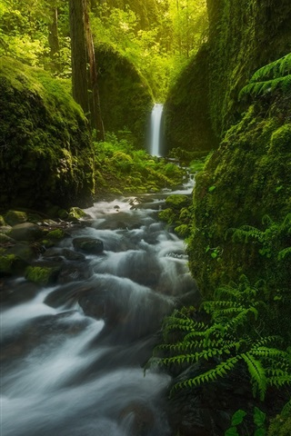 iPhone Wallpaper Mossy Grotto Falls, waterfall, trees, fern, green, Oregon, USA