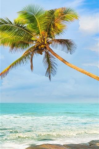 iPhone Wallpaper Palm trees, coast, sea, stones