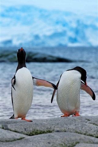 iPhone Wallpaper Penguins, couple, antarctica