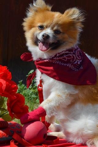 iPhone Papéis de Parede Puppy e flores vermelhas