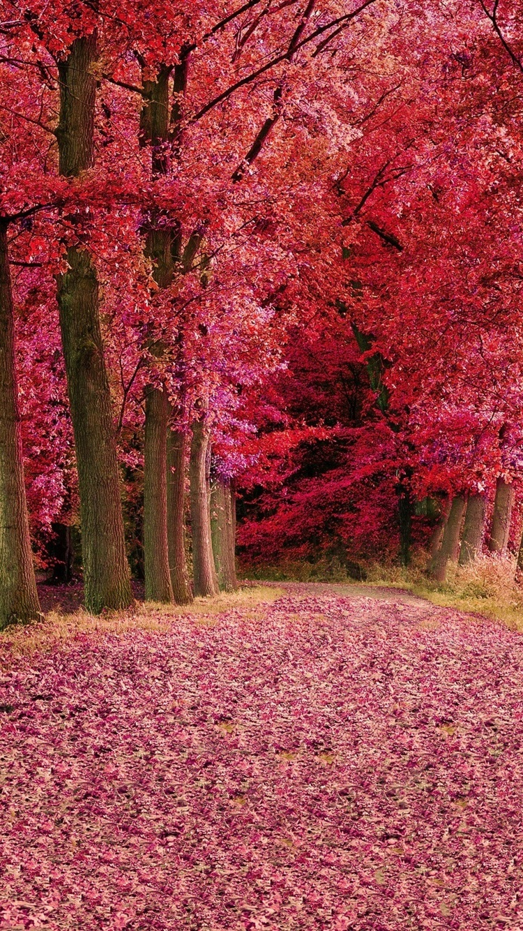 Red Forest At Fall HD Wallpaper Wallpaper Studio  Tens of