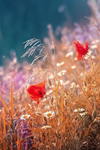 iPhone Papéis de Parede Papoilas vermelhas, flores, capim, verão