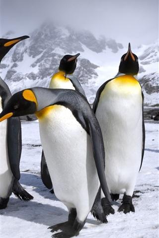 iPhone Wallpaper Royal penguins, snow, mountains