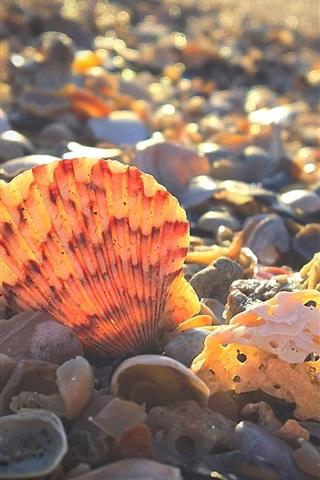 iPhone Wallpaper Shore, shells, sunshine