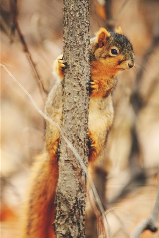 iPhone Wallpaper Squirrel climbing tree to look around