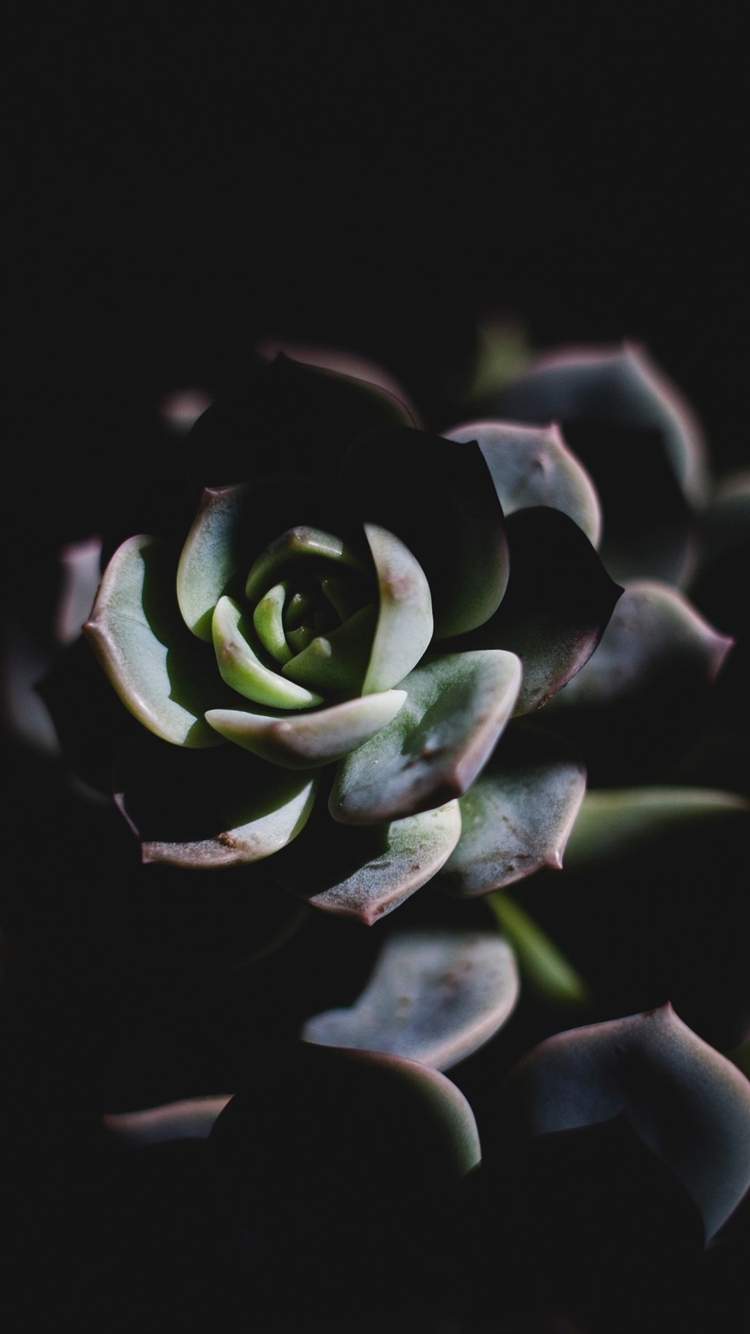 Wallpaper Succulent Plant Darkness 3840x2160 Uhd 4k Picture Image