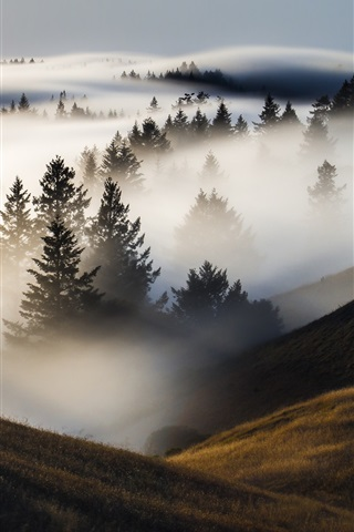 iPhone Wallpaper Trees, mountains, fog, morning