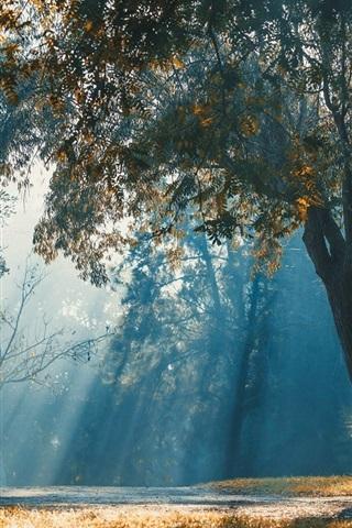 iPhone Wallpaper Trees, sun rays, grass, bench, park