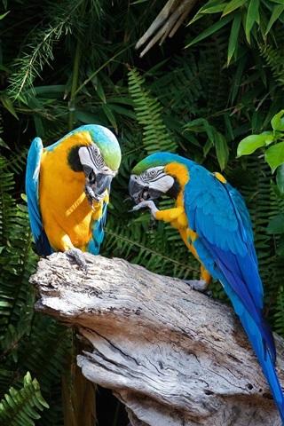 iPhone Wallpaper Two parrots, stump, plants