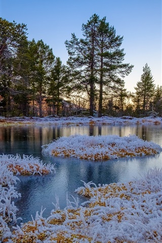 iPhone Wallpaper Winter, frozen, grass, trees, pond, Norway