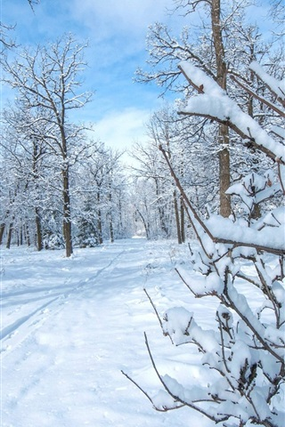 iPhone Wallpaper Winter, snow, trees, cold, sun