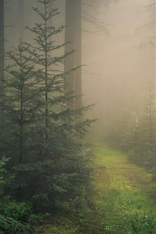 iPhone Wallpaper Baden-Wurttemberg, Black Forest, fog, Germany