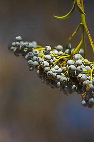 iPhone Wallpaper Berries, twigs, bokeh