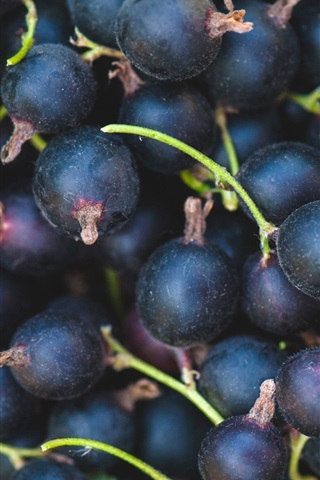 iPhone Wallpaper Black currants, berries