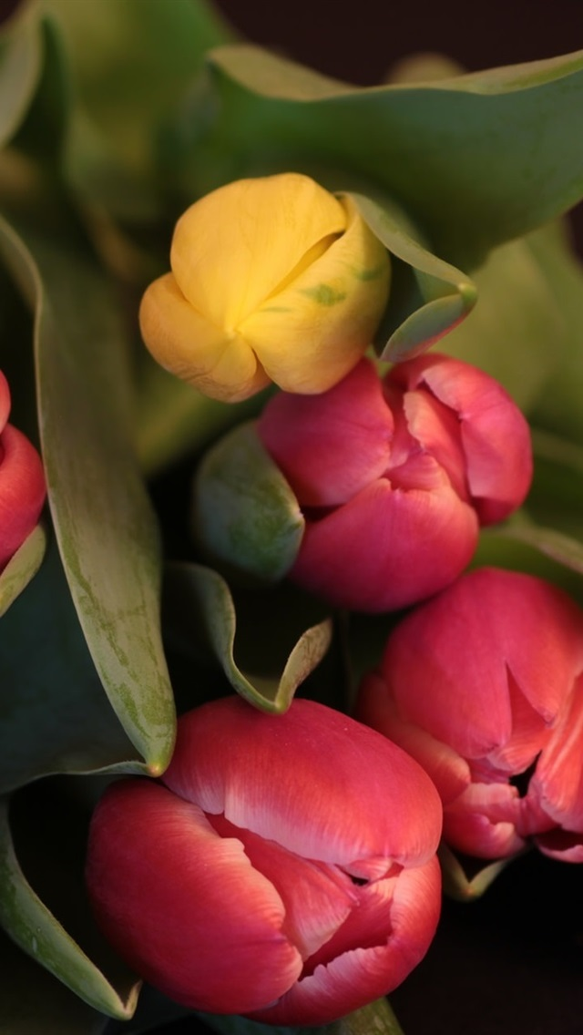 Bouquet Tulips Red And Yellow 640x1136 Iphone 55s5cse