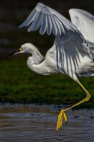 iPhone Wallpaper Egret run, wings, neck