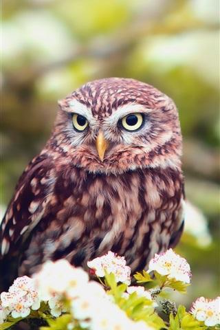 iPhone Wallpaper Flowers, spring, owl