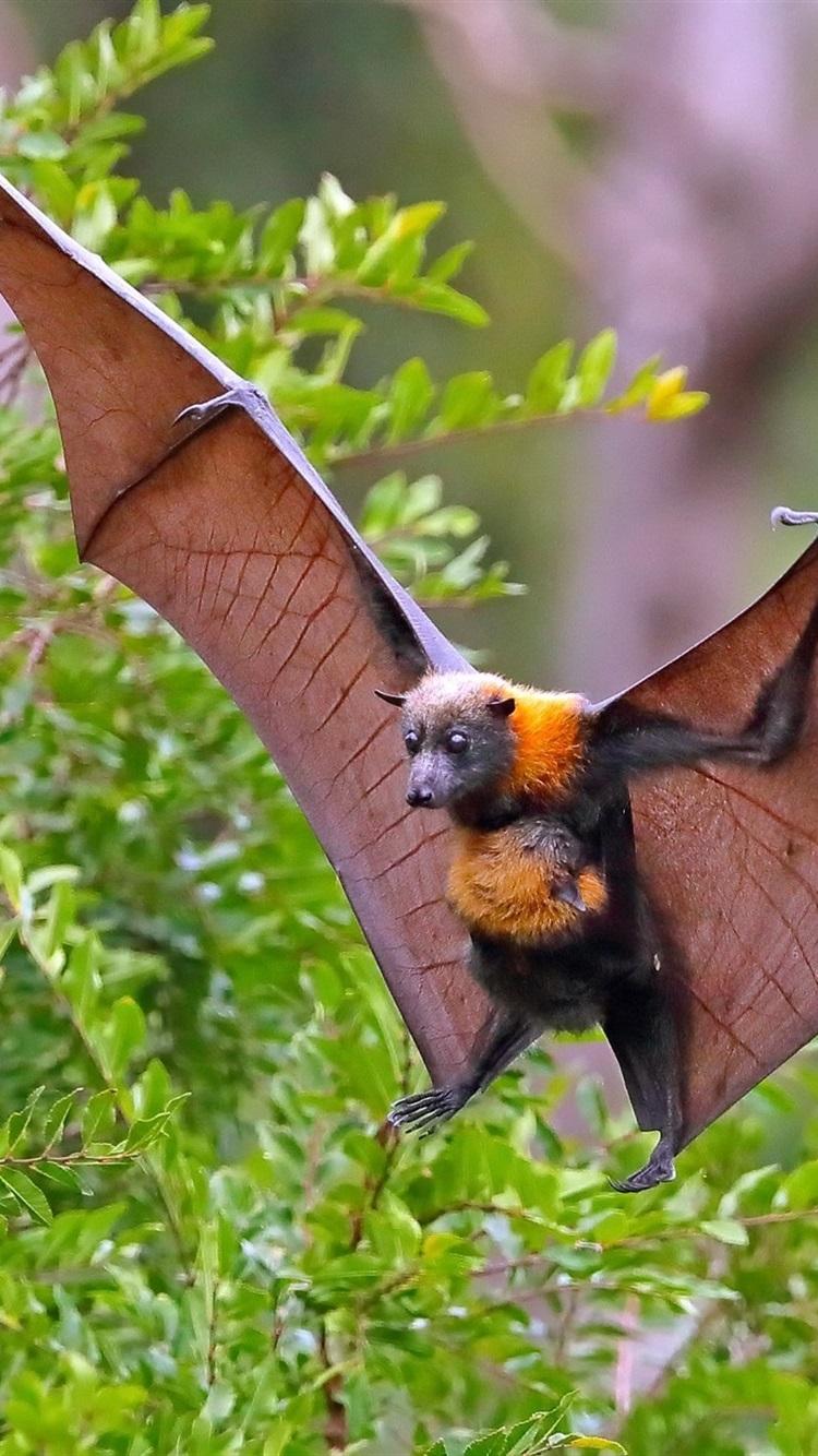 Обои кусты, крылья, летучая лисица. Лисы foto 7
