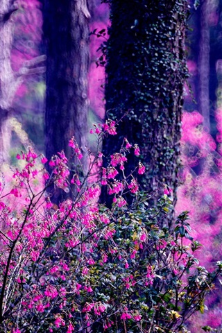 iPhone Wallpaper Forest, pink flowers, trees, blurry