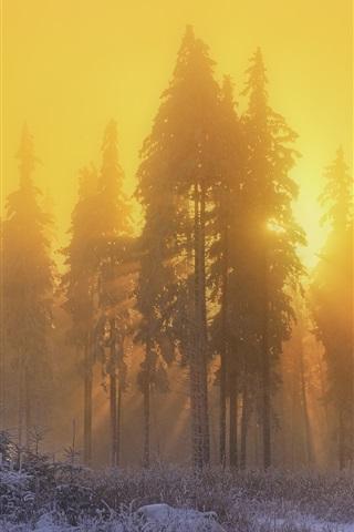 iPhone Wallpaper Forest, trees, snow, winter, sunrise, sun rays, fog, morning