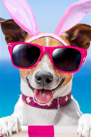 iPhone Wallpaper Funny dog, glasses, butterfly, summer